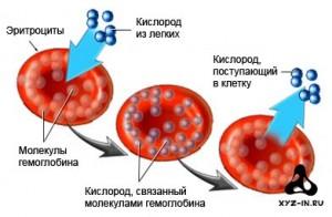1330157416_hemoglobin