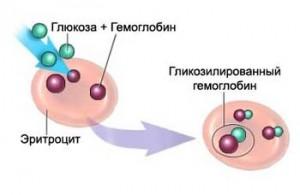 glikozilirovannij-gemoglobin_1